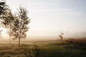 Jak dbałość o ściernisko wpływa na plony?