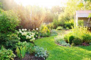 Projektowanie małego przydomowego ogródka – poradnik ogrodniczy