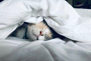 Przyjemna pościel to gwarancja dobrego snu